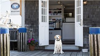 The Cottages & Lofts at the Boat Basin, Pet Friendly Cottages