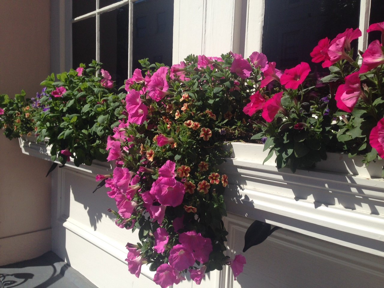 charlestonwindowboxes