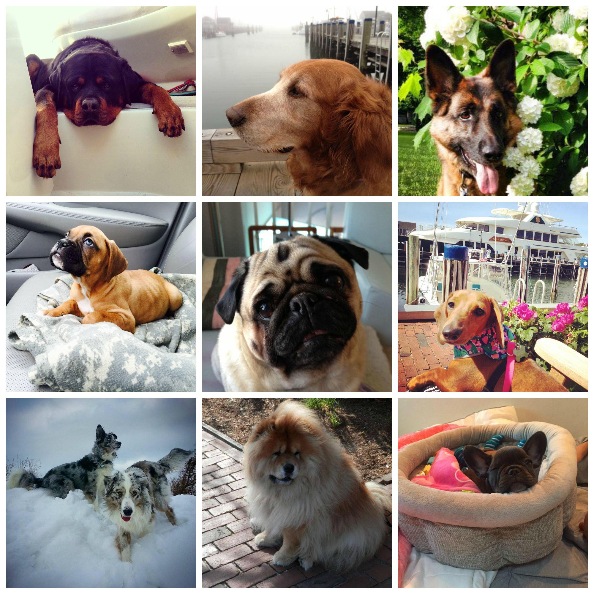 dog collage