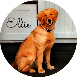 Ellie Round Name