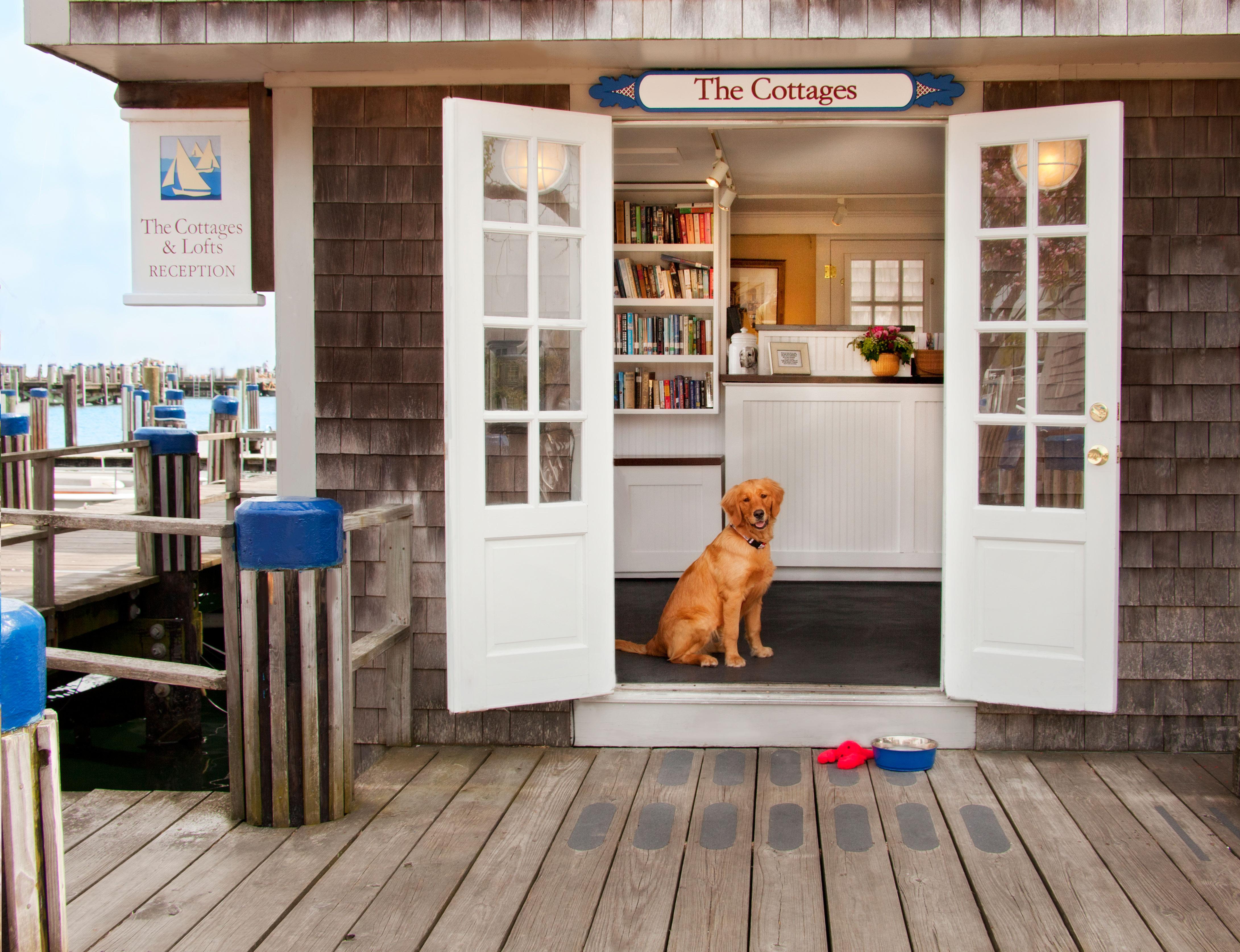 Lucky dog - Ellie in the doorway