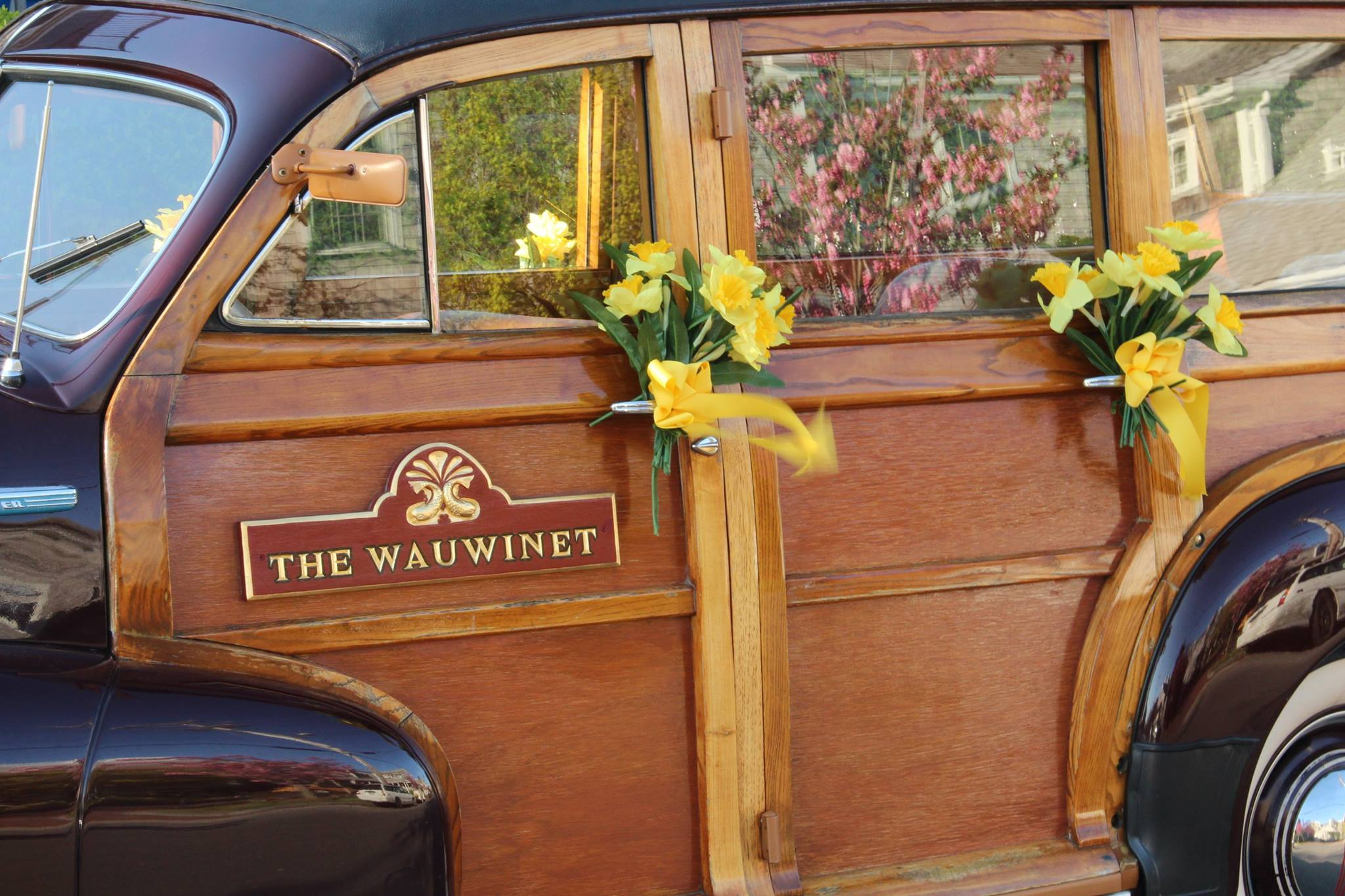 wau woody daffodilsjpg