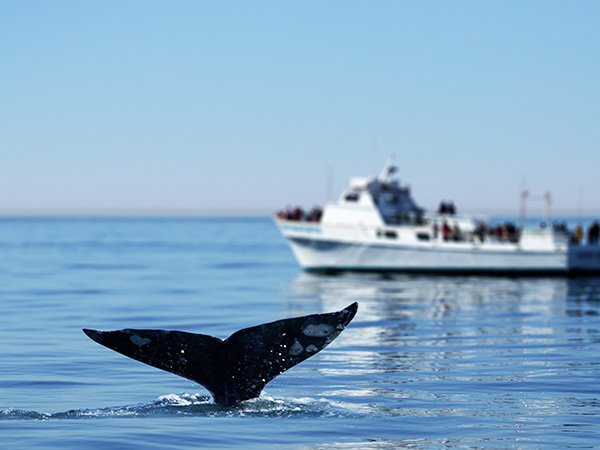Nantucket Island Sailing, Whale Watching and Cruises